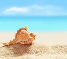 snäckskal på sandstranden foto