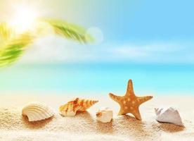 snäckskal på sandstranden och handflatan foto