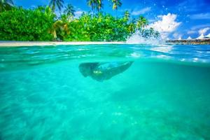 njuter av marint liv foto