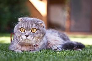 söt katt njuter av sitt liv foto
