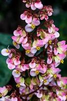 små blommor foto