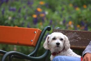 söt hund tycker om parkbänken foto