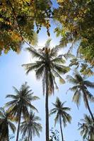 palmer mot en bakgrund av solljus foto