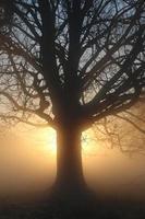 träd vid soluppgången foto