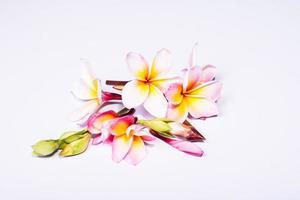 blommande gula plumeria. foto