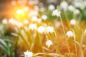 snöflinga flare våren foto