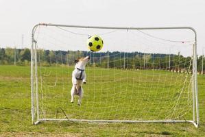 rolig hund som fångar en boll foto