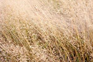 delikat ogräs och gräs i morgonsolens ljus foto