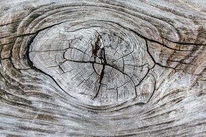 knar trä foto