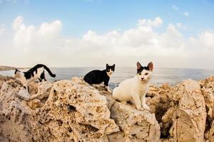 katter på gatan foto