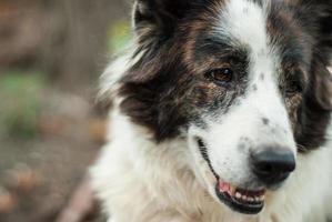porträtt av hunden foto
