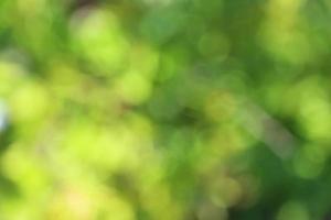 naturbakgrund, bokeh foto