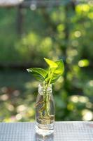 växt i flaska foto