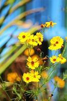 blommor i solljuset foto