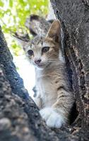 liten söt kattunge på träd foto