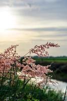 vilda blommor i solnedgång foto