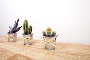 olika kaktusar i krukor foto