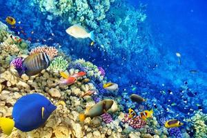 undervattensvärld med koraller och tropiska fiskar.