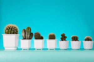 kaktus i krukor foto
