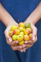 närbild av kvinna som håller krabba äpplen foto