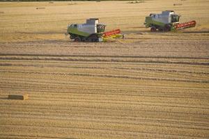 kombinerar skörda vete i soligt, lantligt fält