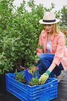 återplantera blomsterplantor foto