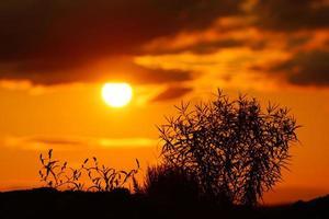 surrealistisk skymning färgglada, dramatiska färgglada solnedgång tillbaka upplysta högt gräs foto