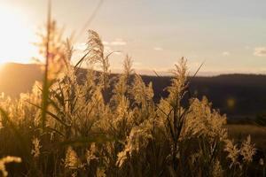 gräs i bakgrundsbelysning foto