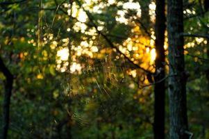spindelnät bakgrundsbelyst av solnedgången