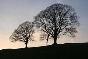 träd silhuett foto
