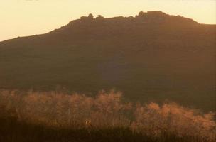 grov tor från brun willy