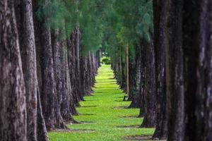 tall och gräs foto