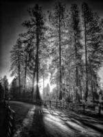 morgonträd foto