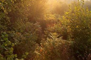 bakgrundsbelyst skog foto