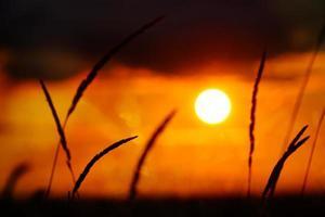 minimalistisk natur, gyllene solnedgången med högt gräs foto