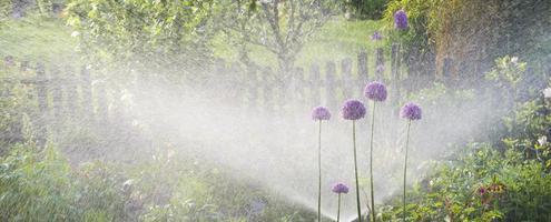 vattna blomsterrabatter foto