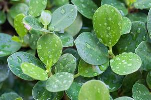grönt blad med vattendroppar