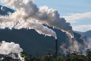 sockerkvarn rökbuntar