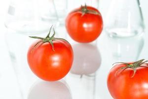 genetisk modifiering rött tomatlaboratoriumsglas på vit foto