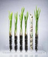 genetiskt modifierade växter kostar foto