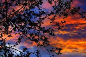 surrealistisk skymning genom grenar: dramatisk solnedgång bakgrundsbelyst träd foto