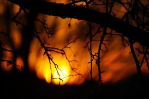 skymning genom grenar: dramatisk solnedgång bakgrundsbelyst träd foto