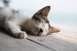 söt sovande katt. foto
