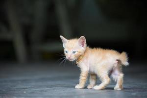 baby kattunge tittar omkring.