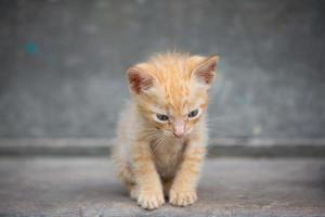 söt kattunge som sitter på golvet.