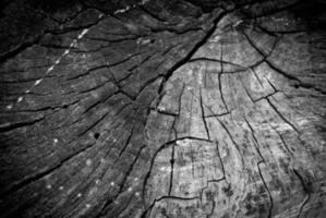 trä bakgrund foto
