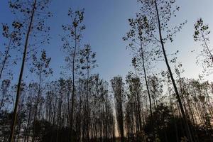 cilavegna skogen foto