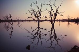 gryning reflektioner 1 foto