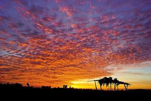 röd himmel foto