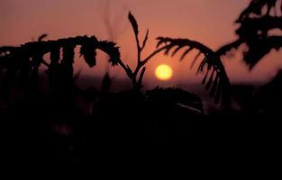 stor sur solnedgång, Califonia